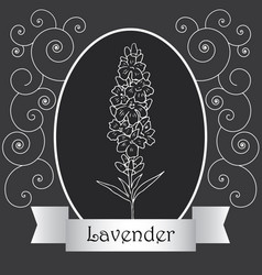 lavender-06 vector image vector image