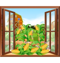 Corn field in the farm vector