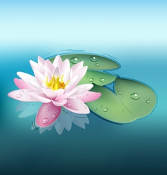 Waterlily vector