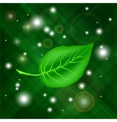Spring green leaf vector