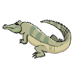 sketch of crocodile vector image
