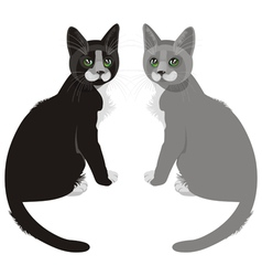 sitting cats vector image