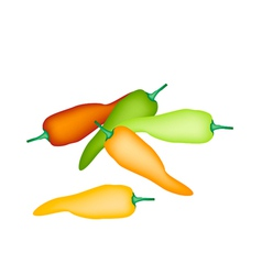 A Set of Colorful Sweet Peppers on White Backgroun vector image