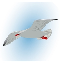 Seagull in the sky vector