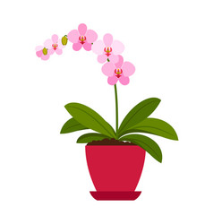 orchid pink house plant vector image vector image
