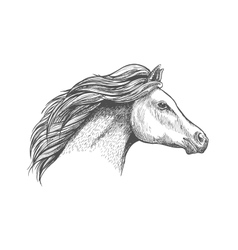 Racehorse mare head for horse racing design vector