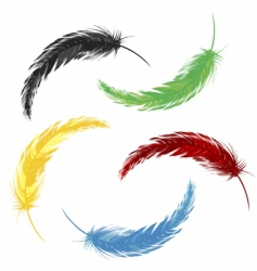 Set of colored feathers vector