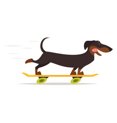 dachshund dog riding skateboard vector image