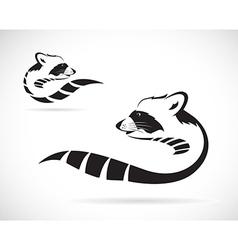 Raccoons vector image