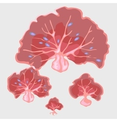 Fancy red coral underwater in the form of a fan vector