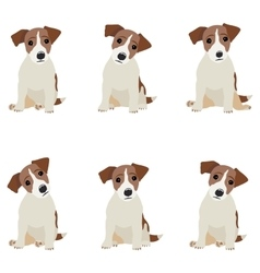 Jack Russell Terrier of a dog vector image vector image