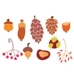 set of autumn cones and plants vector image