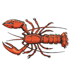 Sketch of lobster vector