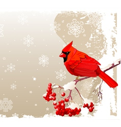 Red cardinal bird background vector