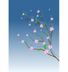 Almond tree vector