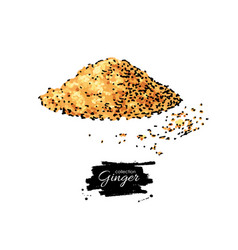 ginger root powder hand drawn vector image vector image