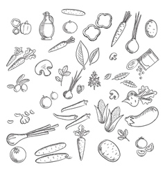 Fresh vegetables and herbs sketches vector