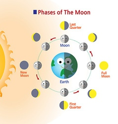 phases vector image