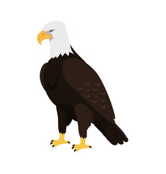 Bald eagle flat design vector