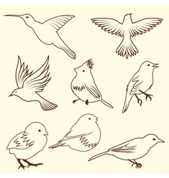 Set of differnet sketch bird for design use vector