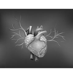 A human heart vector image vector image