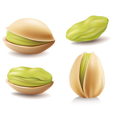 Group of different pistachio nuts vector