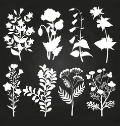 White herbal and floral silhouettes on chalkboard vector