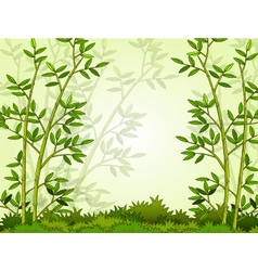 Beautiful bamboo forest background vector