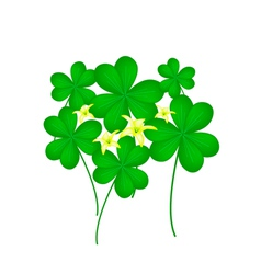 Fresh water clover plant on white background vector