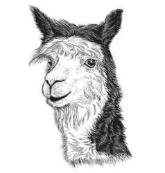Sketch of a alpacas face vector