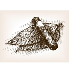 Tobacco leaves and cigar sketch style vector image vector image