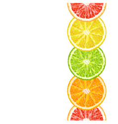 Seamless border from citrus slices vector