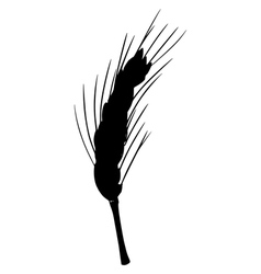 Silhouette of ear of wheat vector