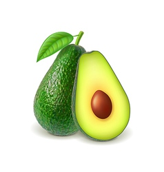 Avocado and slice isolated on white vector