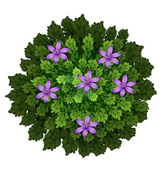 Purple flowers in green bush vector