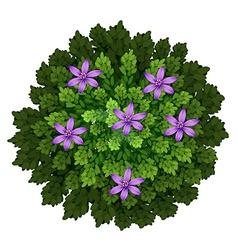 Purple flowers in green bush vector
