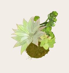 bromeliads in hanging basket sketch vector image
