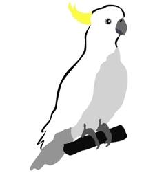 cockatoo vector image vector image