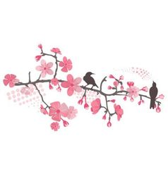 cherry tree with flower vector image vector image