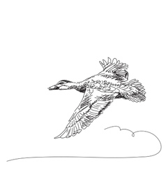 Duck flying vector