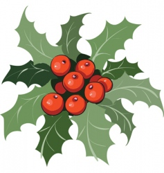 holly vector image