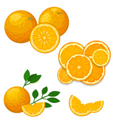 oranges and orange products natural vector image vector image