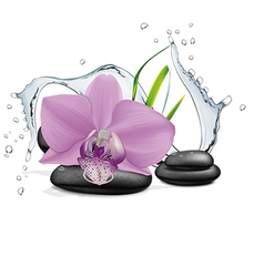 Orchid flower water splash and zen stone vector