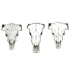 Drawing animal skulls set vector