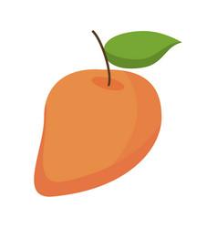 Mango juicy fruit icon vector