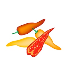 Red and Yellow Poblano Chili on White Background vector image