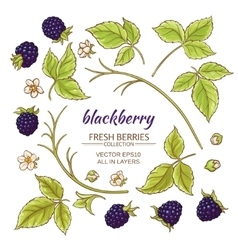 blackberry elements set vector image vector image
