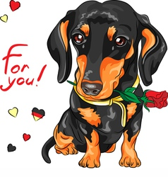 Cute dog breed dachshund with red flower vector