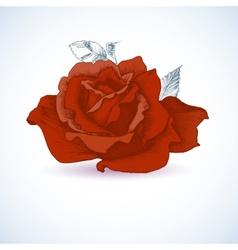 Red rose design vector image