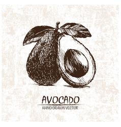 digital detailed avocado hand drawn vector image